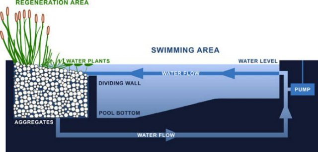 swimming_pool_natural_pond_diagram_via_ecobrooklyn